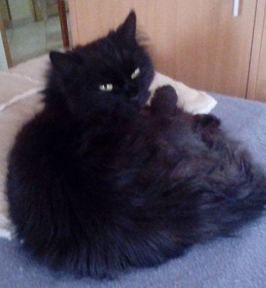 A cica is meggyógyulhatott